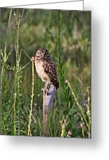 Adult Burrowing Owl Greeting Card