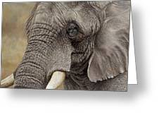 African Elephant Greeting Card by Alan M Hunt