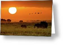 African Elephants Walking At Golden Sunrise Greeting Card