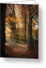 Afternoon Light In Fall Colors Of New England Greeting Card