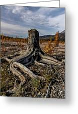 Age-old Stump Greeting Card