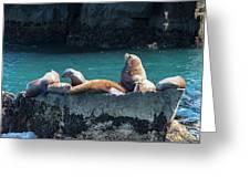 Alaska Steller Sea Lions Greeting Card