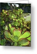 Aloe Succulent Greeting Card