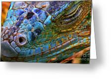 Amazing Iguana Specimen Displaying A Greeting Card