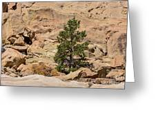 Amazing Life On The Sandstone Cliffs Greeting Card