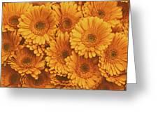 Amber Soaked Greeting Card