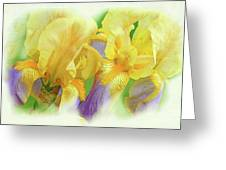 Amenti Yellow Iris Flowers Greeting Card