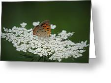 American Copper On Queen Anne's Lace Greeting Card