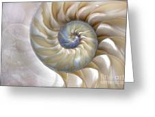 An Amazing Fibonacci Pattern In A Greeting Card