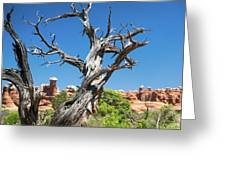 Ancient Dead Juniper With Character Greeting Card