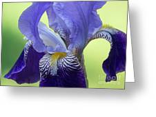 Angie's Iris Greeting Card