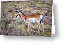 Antelope Buck Greeting Card