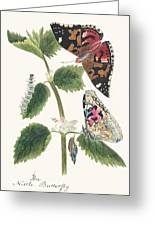 Antique Watercolor Illustration Of Nettle Butterfly In Various Life Stages Published In 1824 By M.p. Greeting Card
