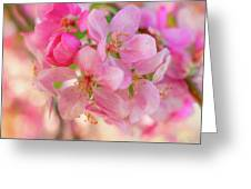 Apple Blossom 12 Greeting Card
