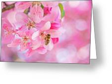 Apple Blossom 2 Greeting Card