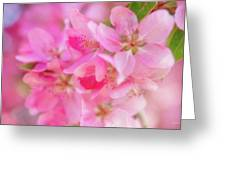 Apple Blossom 5 Greeting Card