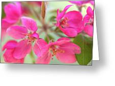 Apple Blossom 6 Greeting Card