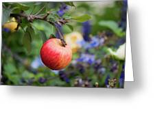 Apple On The Tree Greeting Card