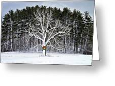 Appleton Tree In Holiday Dress Greeting Card