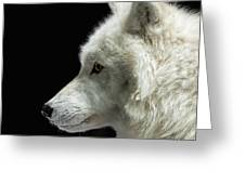 Arctic Wolf In Profile Greeting Card by Susan Rissi Tregoning