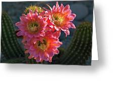 Argentine Giant Pink Trio Greeting Card