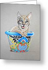 Arizona Wildcat Greeting Card