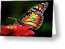 Artistic Monarch Greeting Card