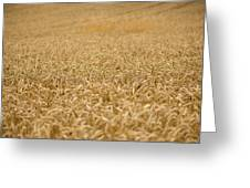 A Field Of Wheat Greeting Card