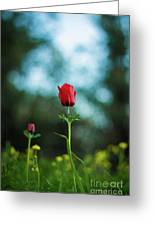 Aspecial Flower  Greeting Card