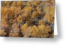 Aspen Autumn Leaves Greeting Card