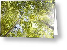 Aspen Canopy With Sun Flare Greeting Card