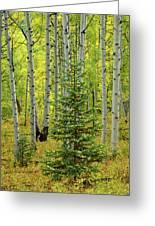 Aspen Christmas Tree Greeting Card