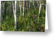 Aspen Solitude Greeting Card