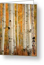 Aspens In Autumn Greeting Card