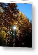 Aspens Sunlight 2 Greeting Card