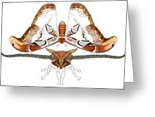 Atlas Moth2 Greeting Card