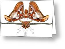 Atlas Moth4 Greeting Card