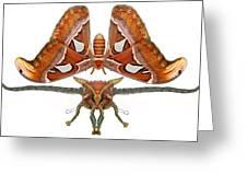 Atlas Moth5 Greeting Card