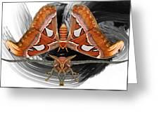Atlas Moth8 Greeting Card