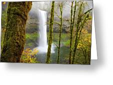 Autumn At Silver Falls State Park Greeting Card by Nicole Young