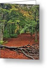 Autumn Blanket Greeting Card