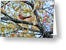 Autumn Cardinal Greeting Card
