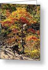 Autumn Color In Smoky Mountains National Park Greeting Card