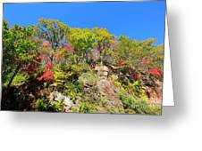 Autumn Color On Newfound Gap Road In Smoky Mountains National Park Greeting Card