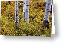 Autumn Contrasts Greeting Card by John De Bord