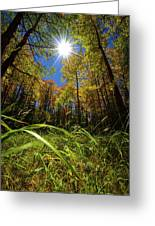 Autumn Forest Delight Greeting Card
