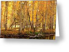 Autumn Gold Rush Greeting Card by Sean Sarsfield