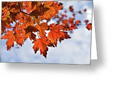 Autumn Maple Leaves Greeting Card