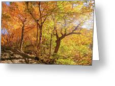 Autumn Morning On Smugglers Notch Greeting Card by Dan Sproul