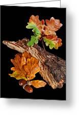 Autumn Oak Leaves And Acorns On Black Greeting Card